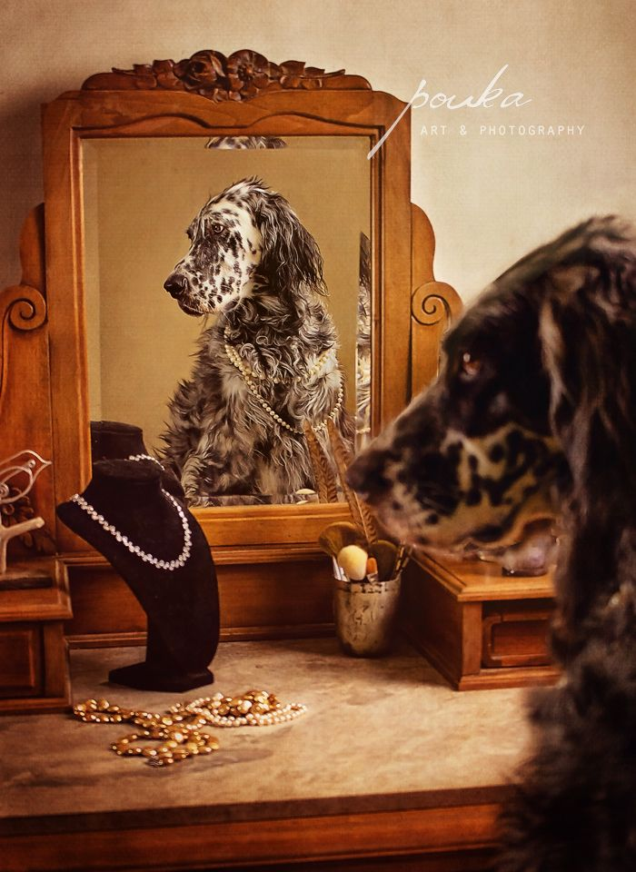 """""""The Two Sides of Sparrow"""". Award-winning photograph of an English Setter. Pouka Art & Photography.  www.pouka.com"""