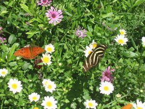 Creating A Butterfly Garden In Phoenix Arizona