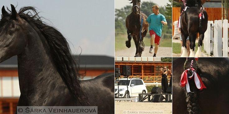 Koně pro kapku naděje - 1.část - dopolední program