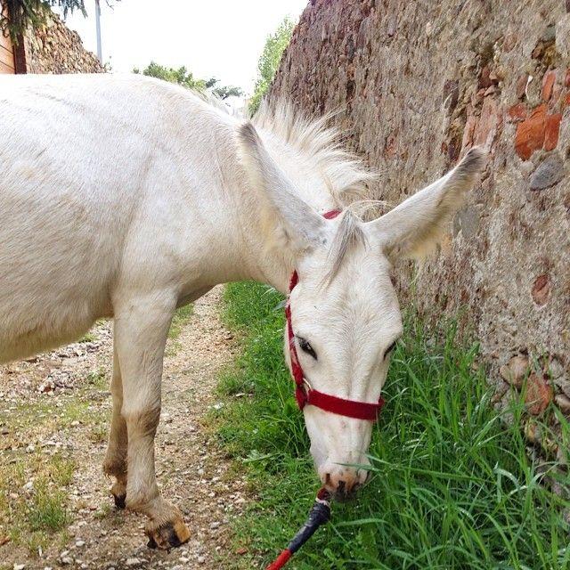 In attesa della #gita Martino si adopera a pulire i vicoli dall'erba #Calci #Pisa
