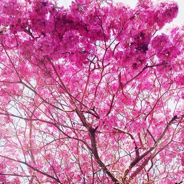 pink! // photo by @Bri W. emery / designlovefest