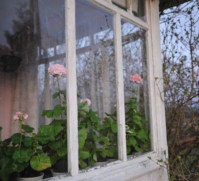 """Våren kommer saaakte, så da er det deilig å kunne starte med plantene """"inne""""   Min kjære synes det har blitt litt vel mange planter, men de..."""