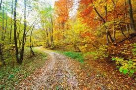 http://us.123rf.com/400wm/400/400/xalanx/xalanx1111/xalanx111100045/11151531-colorido-paisaje-de-otono-de-bosque-caducifolio-y-muchas-hojas-caidas.jpg ...