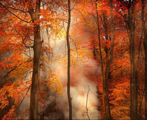 .: Autumnleav, Fall Beautiful, Fall Leaves, Secret Gardens, Autumn Leaves, Fall Colors, Fall Wood, Red Leaves, Fall Trees