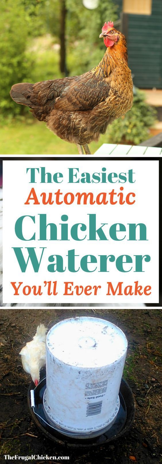 Easiest DIY Automatic Chicken Waterer You'll Ever Make ...
