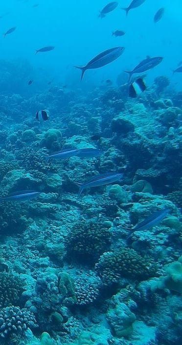Marine life of Thinadhoo