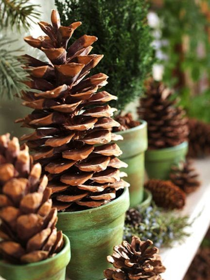 Potted pinecones - beautiful for a mantle or tie a ribbon and maybe a hostess gift?? Paint pots & pinecones to match holidays