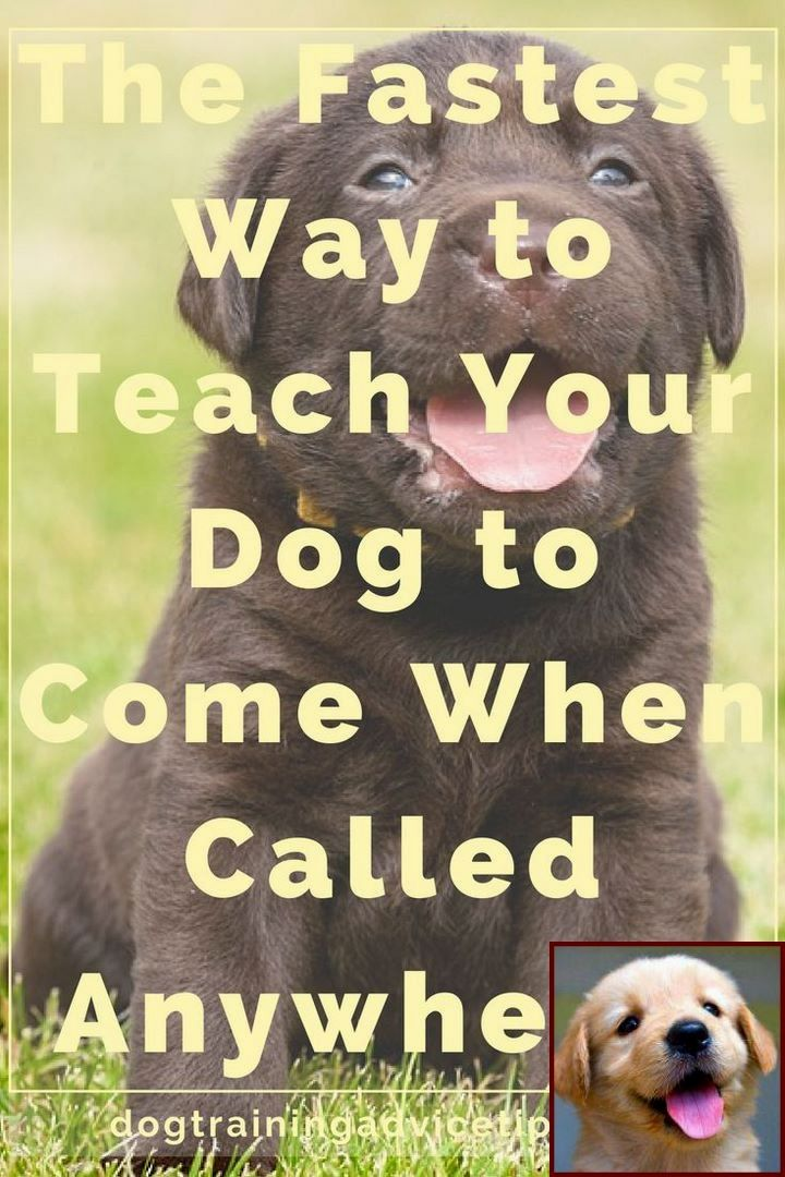 House Training A Puppy In The Rain And Clicker Training Small Dogs Dog Training Training Your Dog Dog Training Obedience