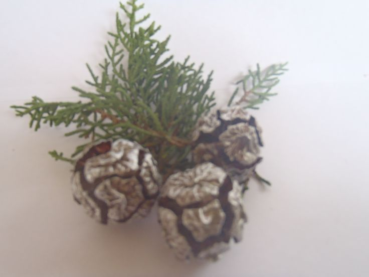 Lightly painting macrocarpa cones with silver paint highlights the natural texture.