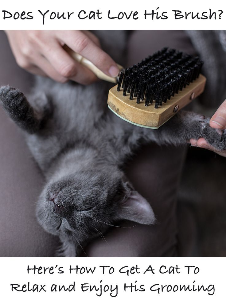 Helping your cat learn to love his brush. Cat grooming techniques and the importance of selecting the right cat brush