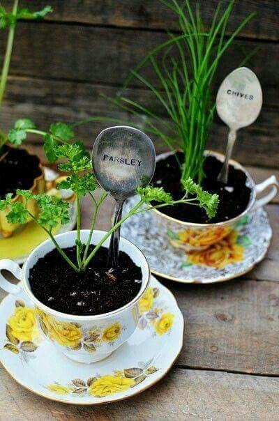 Herbs in tea cups