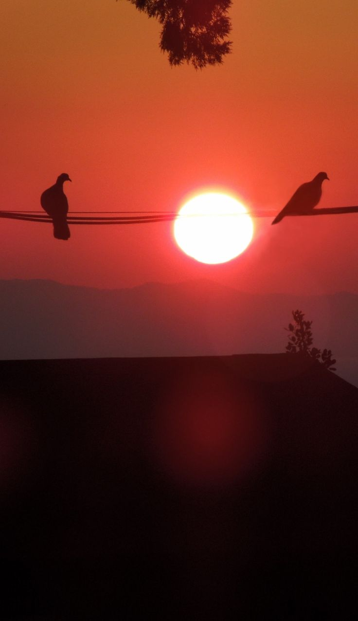 Birds on a Wire - Pigeons at Sunrise, Taormina, Sicily.