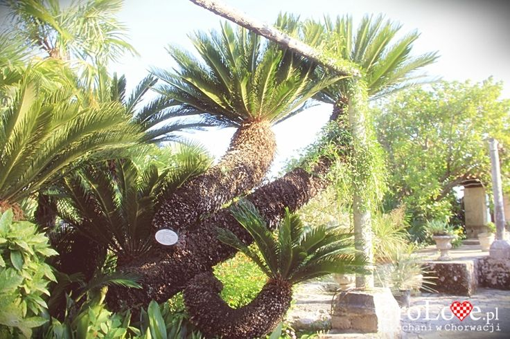 Roślinność w Arboretum Trsteno || http://crolove.pl/arboretum-w-trsteno/ || #Arboretum #Trsteno #Croatia #Chorwacja #Hrvatska #Garden #Travel #Summer