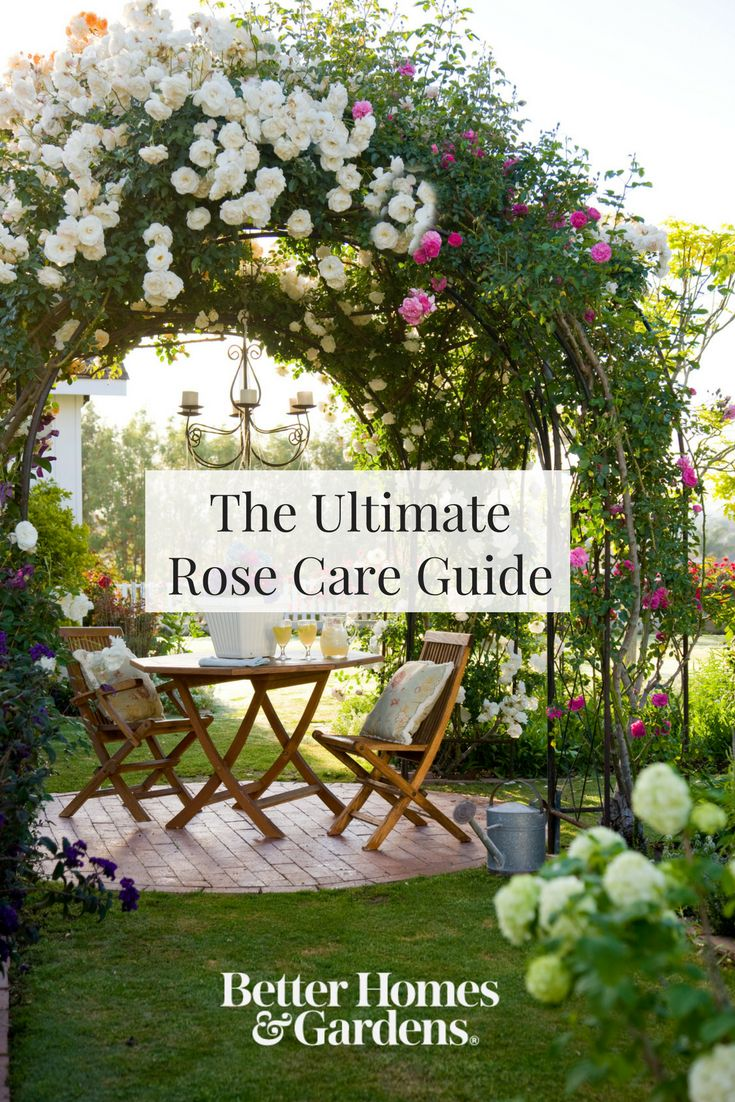 Roses are one of the most popular garden flowers that have a beautiful aroma. From picking the right site to the right varieties, we're giving you all the tips you need to grow beautiful rose.