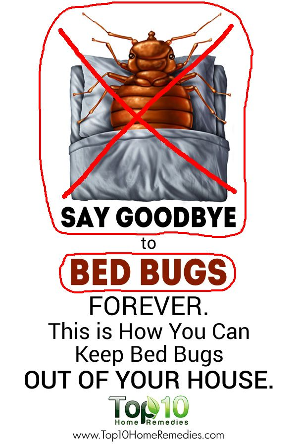17 Best Ideas About Bed Bug Remedies On Pinterest Bed