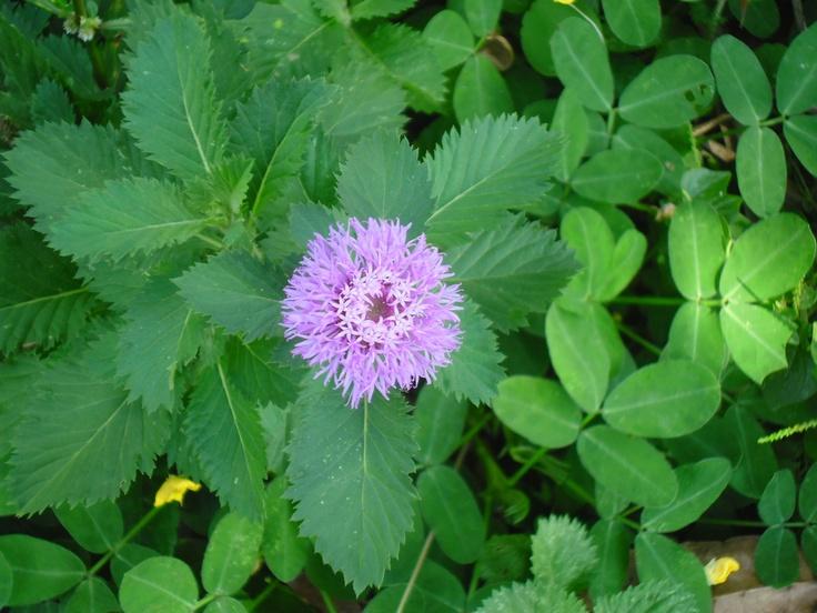 Flor adornada por Microflores