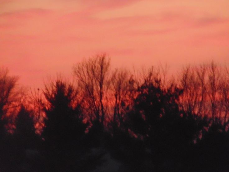 Sunset Treetop