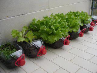 Huerta en la terraza hecha en botellones plásticos. El plástico de las botellas pet puede tardar hasta 1000 años en degradarse.