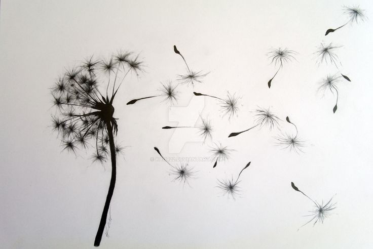 dandelion drawing - Google Search