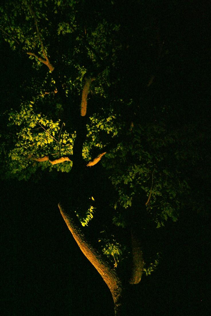 Low Voltage Landscape Lighting For Trees : Images about low voltage landscape lighting on