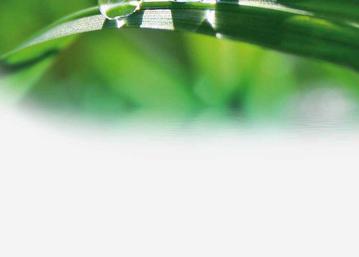 Maschera base¹ Argilla verde fine 1 bicchiere, miele 1 cucchiaino, olio di mandorle dolci o in sua vece olio extravergine di oliva 1 cucchiaino, acqua minerale naturale 1/2 bicchiere. Quattro sostanze naturali ricche di forze e di calore solare. In una tazza contenente l'acqua minerale sciogliete il miele, aggiungete l'olio, omogeneizzate il tutto, quindi aggiungete …