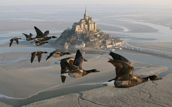 http://www.somewhereclub.com/wp-content/uploads/2013/04/christian_moullec_bernaches_et_Mont-Saint-Michel1.jpg