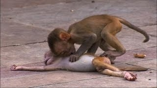 Monkey Troop Mourns Loss of Baby. Made me tear up knowing that even animals go thru hard times and show emotion.