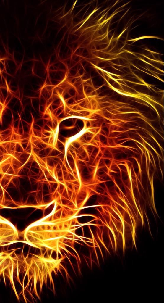 #lion #Galatasaray #wallpaper #animals