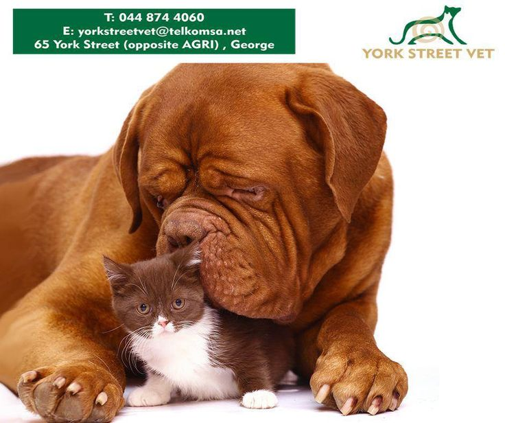 Contact us at 0448744060 for inoculations and sterilisations for cats and dogs. Unfortunately we don't do consultations. #YorkStreetVetShop #inoculations #sterilisationshttps://www.facebook.com/Yorkstreetvetshop/photos/pb.646016452164207.-2207520000.1439134251./803860179713166/?type=3