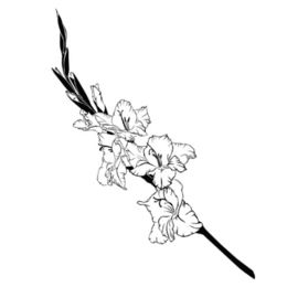 gladiola  tattoos | ... tattoo done, have you considered a gladiolus flower tattoo? Scroll