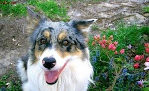 Cão ganha presente no seu 14° aniversário e tutora se surpreende com a reação dele