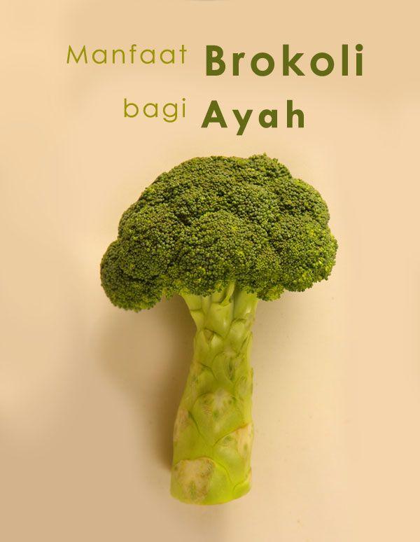 Manfaat Brokoli untuk Ayah :: Broccoli for Dads :: Broccoli :: Dad Klik untuk tahu manfaat brokoli bagi Ayah
