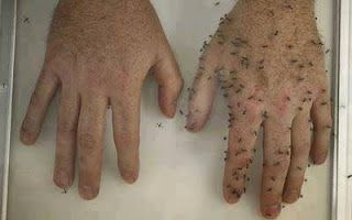 Easy All Natural DIY Mosquito Repellant
