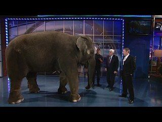 The Tonight Show with Jay Leno: Tim Allen, Dave Salmoni, Sara Bareilles: Dave Salmoni -- Dave Salmoni shares an elephant with Jay and Tim Allen. -- http://wtch.it/sNpko