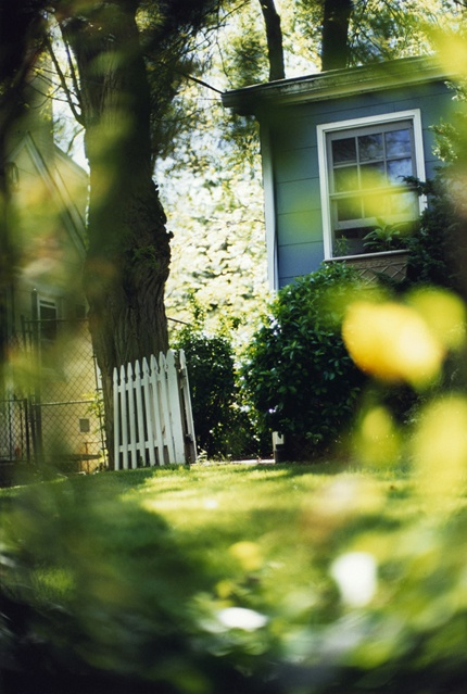 Between Maple and Chestnut by Terri Weifenbach
