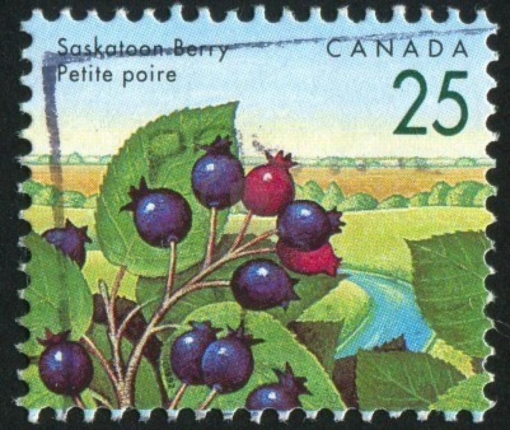 Saskatoon berries!!