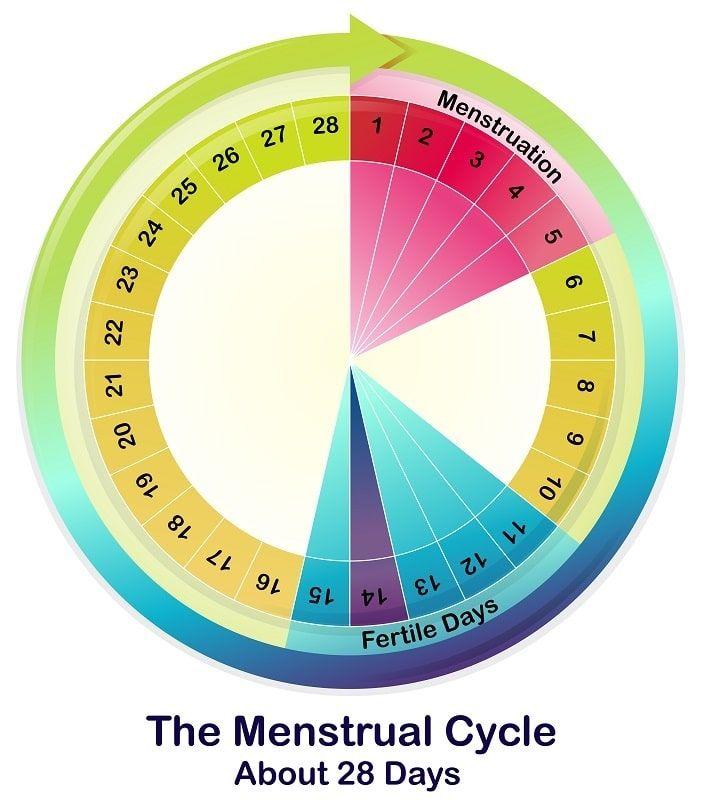 Calculadora De Días Fértiles Todos Los Detalles Que Debes Conocer Menstrual Cycle Menstrual Irregular Menstrual Cycle