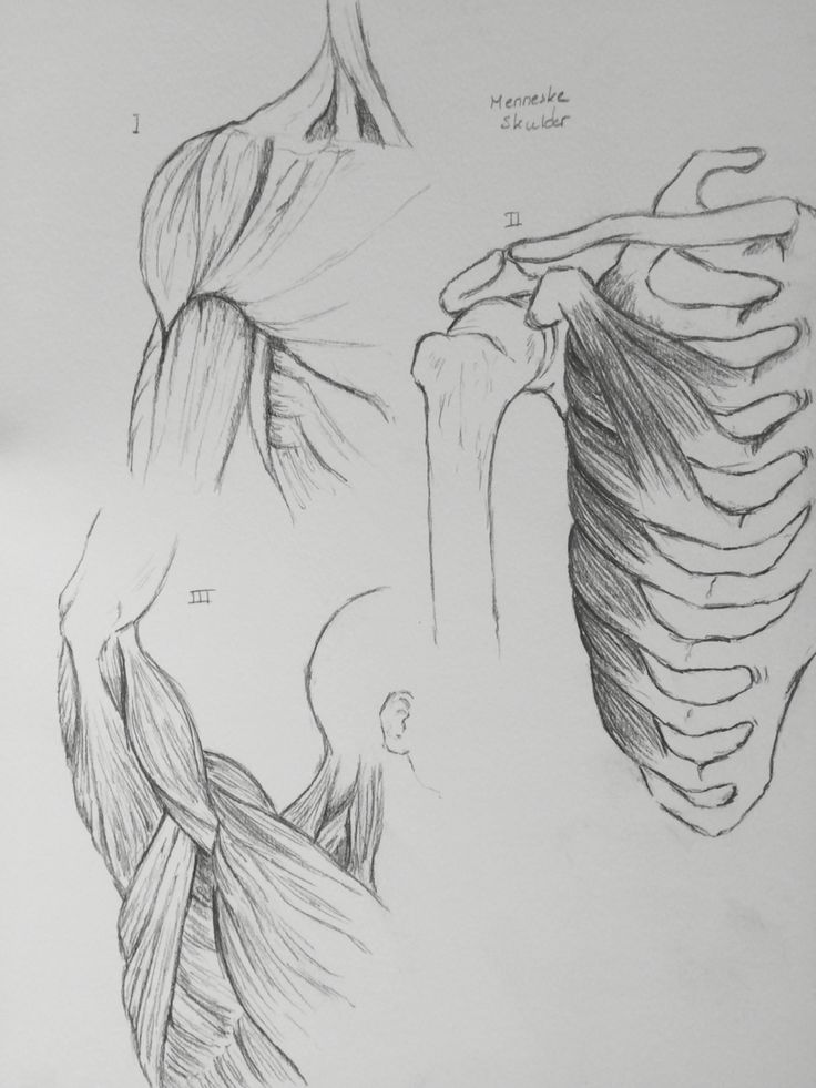 Human shoulder