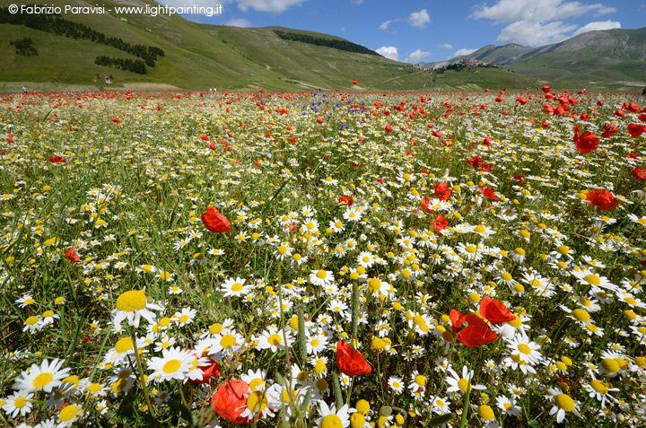 Travel Guide to Castelluccio di Norcia in Italy for the Fioritura (Flower Festival)