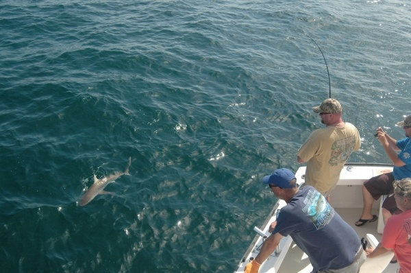 Catching a shark sportfishing reports poacher charters for Outer banks surf fishing tips