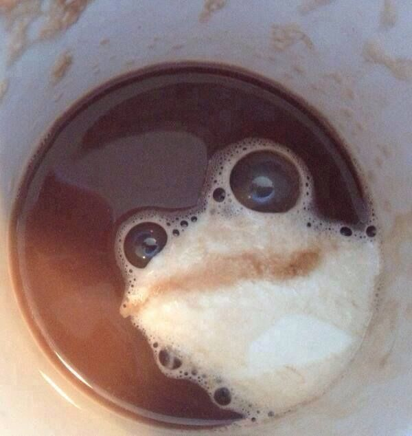 Coffee & frogs!