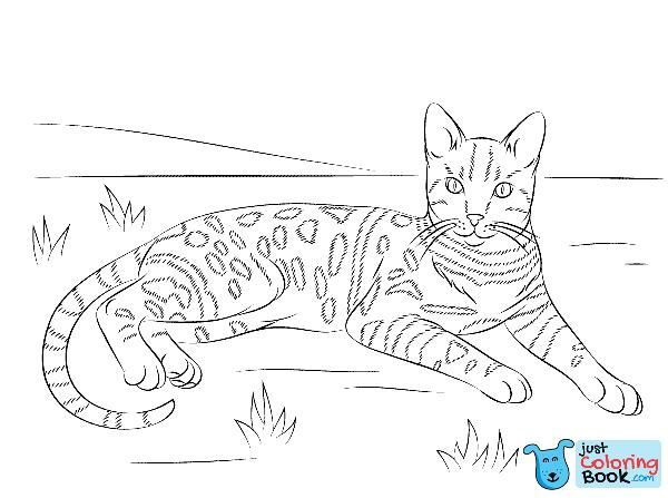 Brown Spotted Tabby Bengal Cat Coloring Page Free Printable With