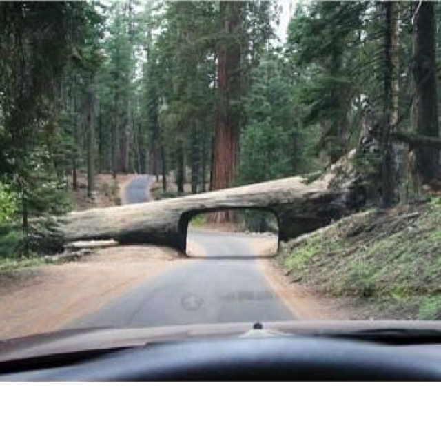...Sequoia National Park and drove through this tree but nobody really cared because the kids were starving and so whiney we were thinking about feeding them to the bears...