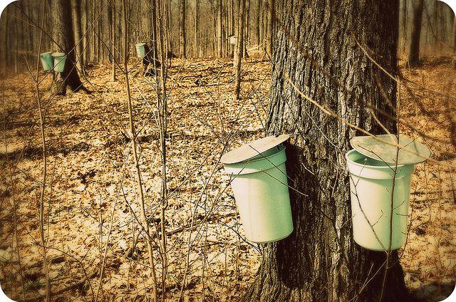 Sugar Bush: Elmira, Ontario | Flickr - Photo Sharing!