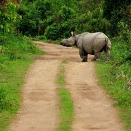 Save the Rhinos   Photo by Bharath Ram — National Geographic Your Shot