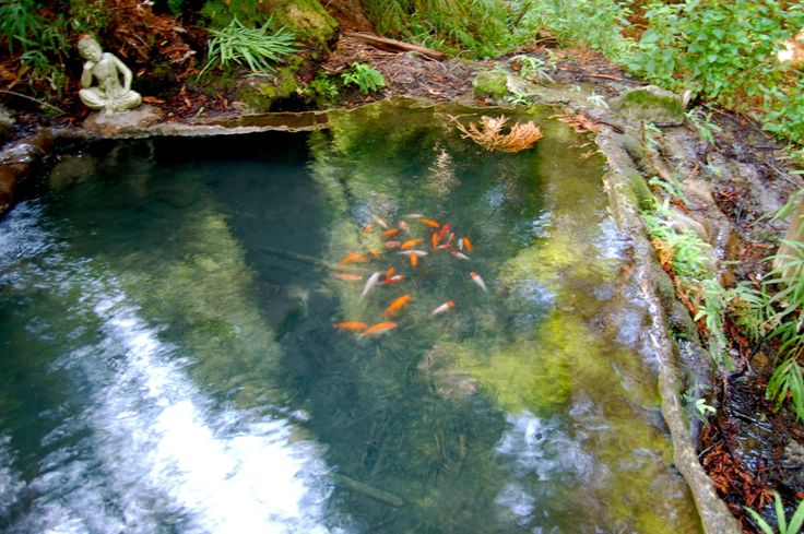 Has anybody stumbled across this hidden gem the koi pond for Fish pond system