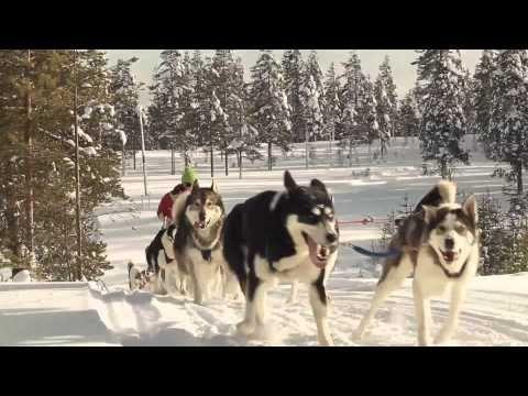 Excursión con Huskies en el norte de Finlandia – Rokua Geopark