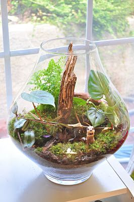 Blog with lots of cute terrarium theme ideas