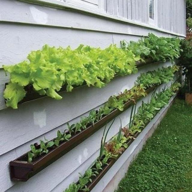 Cute for herb garden