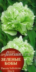 Пион древовидный Зеленые Бобы купить - Саженцы: Саженцы древовидных пионов каталог